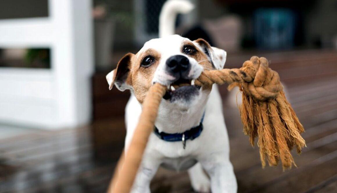 dog-proof your hardwood floor.
